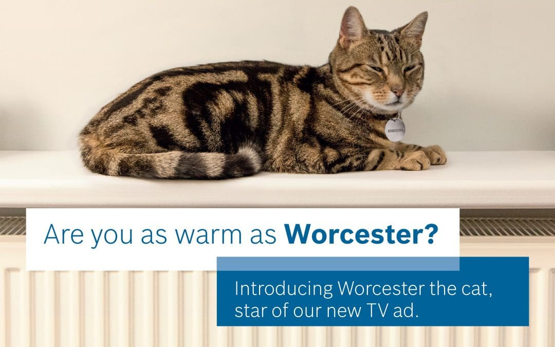 Purfectly as warm as Worcester…the cat
