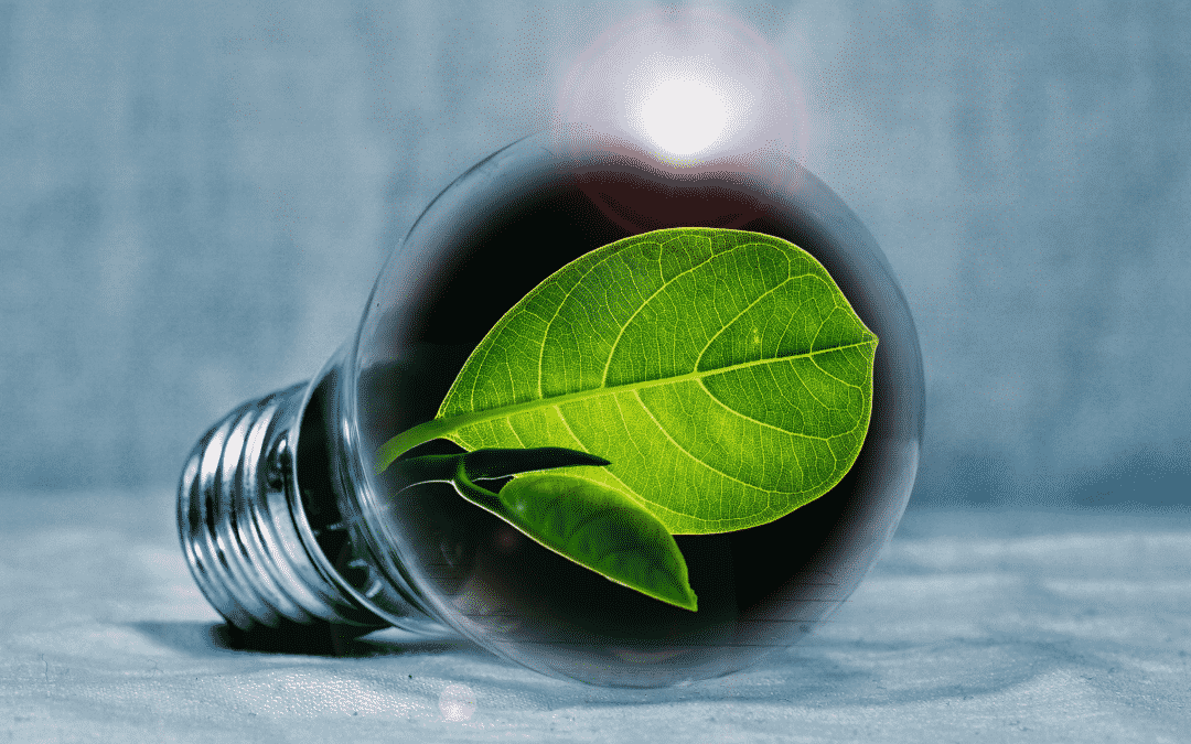 The Low Carbon Economy is an opportunity for your Business