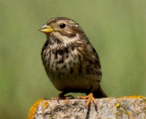 University of Worcester and RSPB Group Link up to Help Farmland Birds
