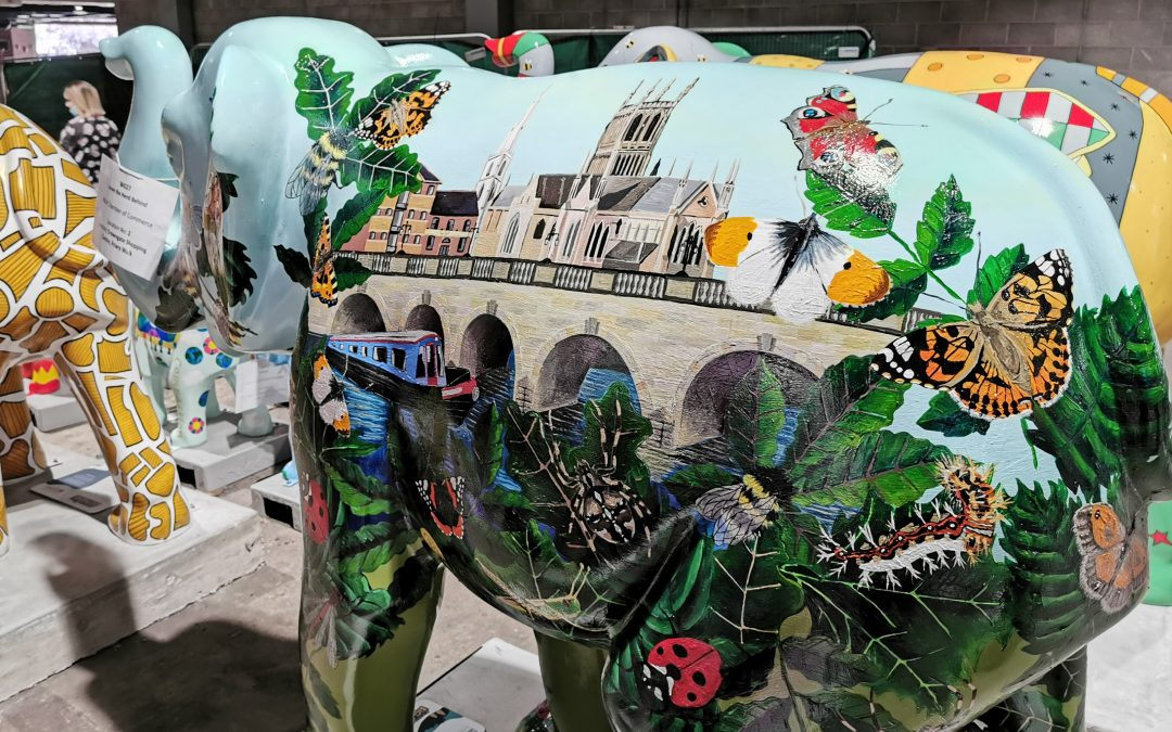 Chamber's Nelly unveiled for Elephant parade